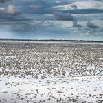 Langli Vadehavets perle18