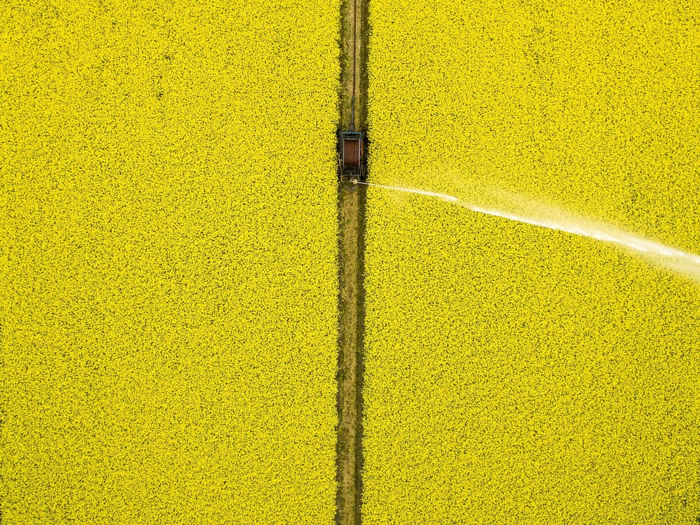 Poster-Drone-90-grader-Gul-rapsmark-30x40-cm.jpg